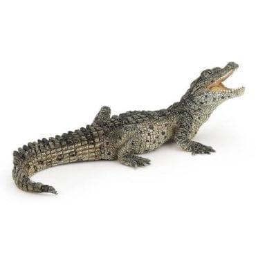 Crocodilo Bebé