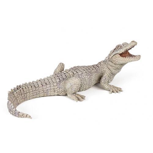 Crocodilo Branco Bebé