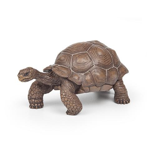 Tartaruga das Galápagos