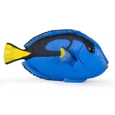 Peixe-Cirurgião