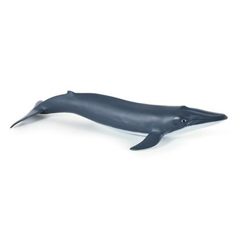 Baleia Azul Bebé