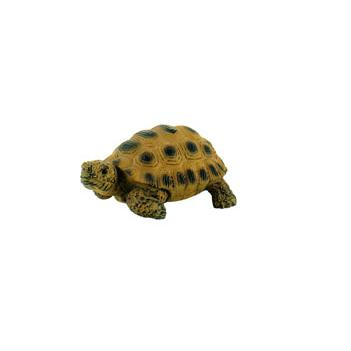 Cria de Tartaruga