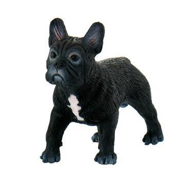 Bulldog Francês Sammy